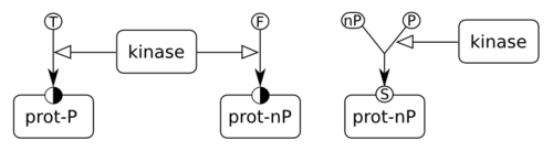 Two ways of representing phosphorylated and non-phosphorylated states of a protein